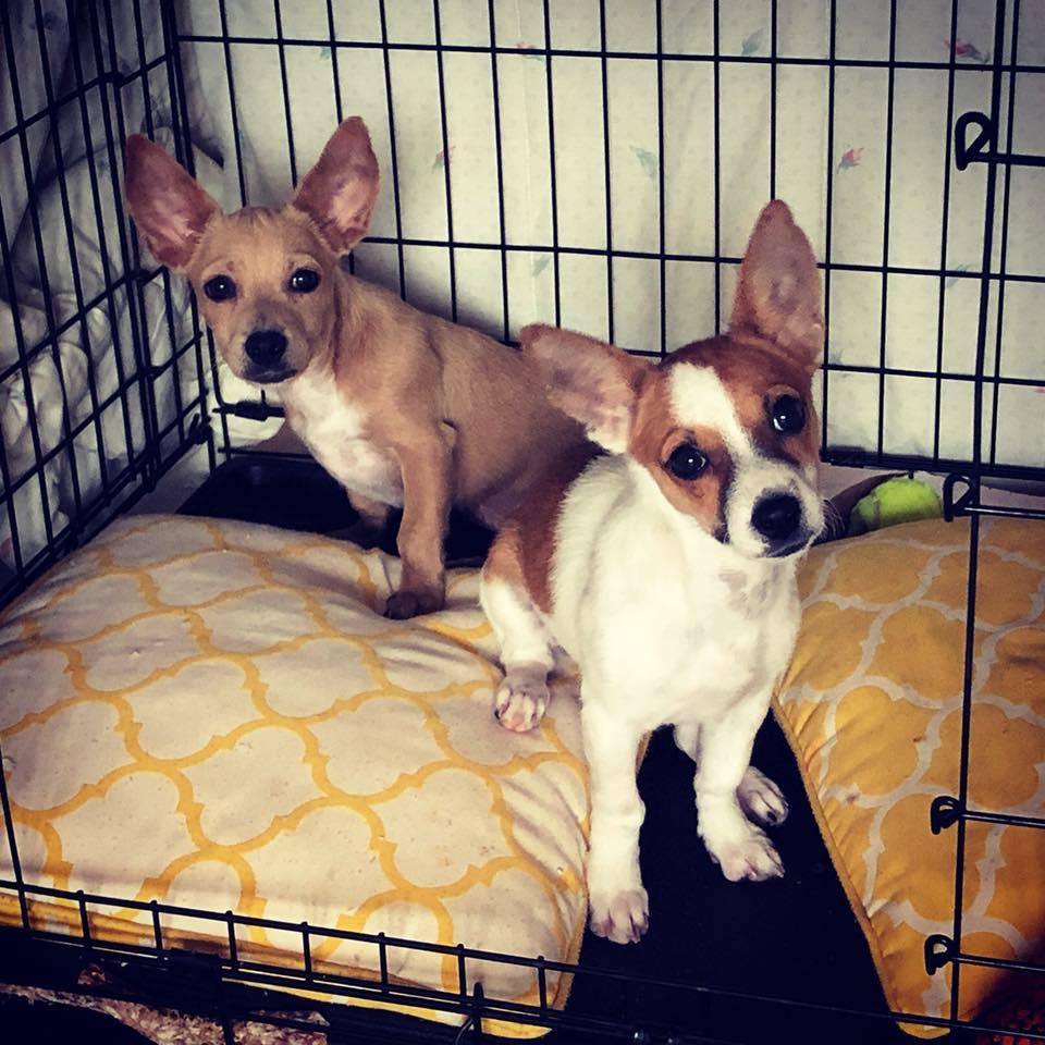 FTLOS puppies